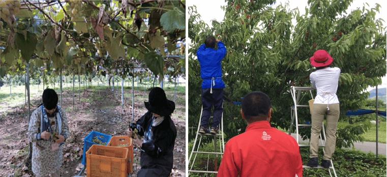 地域の観光農園のニーズと、都市部からの旅行者ニーズを合致させた、新たな農泊体験プログラムづくりを推進!