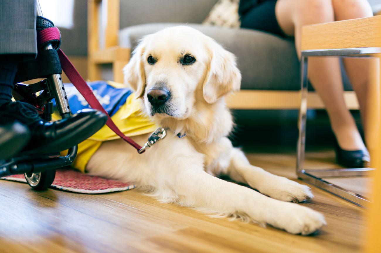 イベント集客目標120%を達成!介助犬の認知拡大・理解促進に貢献